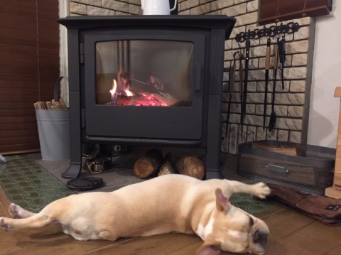 ワンちゃんも暖炉でまったり