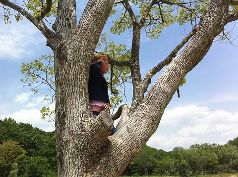 木の上からの風景