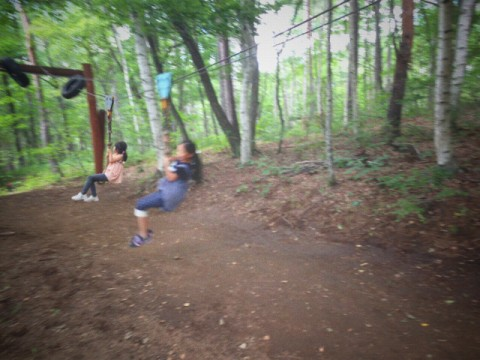 森のアスレチックで遊ぶ