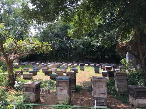 名古屋に養蜂所があるって知ってる?