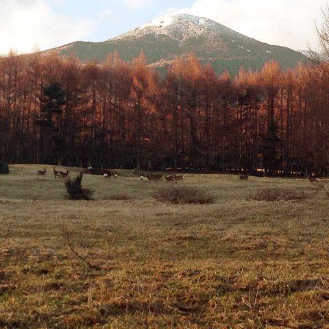 八ヶ岳と野生の鹿