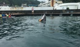イルカと一緒に泳ぐ