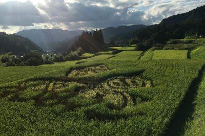 美しい青田の風景