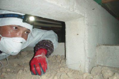 床下を覗いているのは