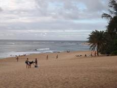 画像 hawaii37 (122).jpg