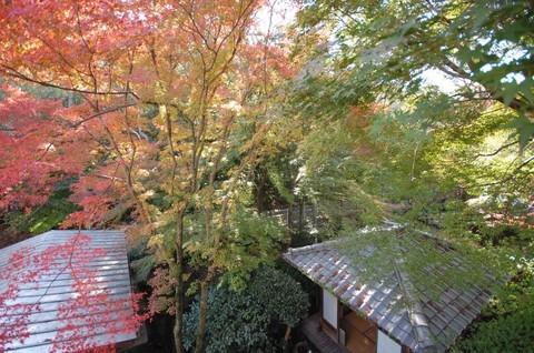 四季を愉しむ茶室付庭園