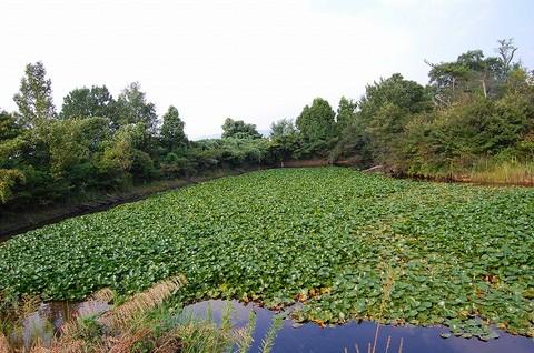 湖を眺めて暮らしてみたい守山区泉が丘の土地