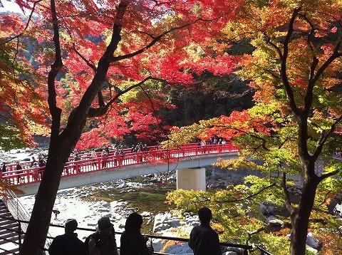 やっぱり香嵐渓の紅葉でしょ