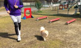 Dog Runデビュー