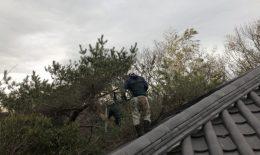屋根の上に登ってみると
